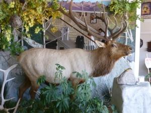 The Bull in Bull Ridge..!