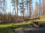 This campground shows the impact of the Parish Creek fire in 20