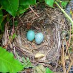 A number of Nests ___ throughout the country