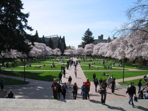 The Quad at the University of Washington - a great institution of learning